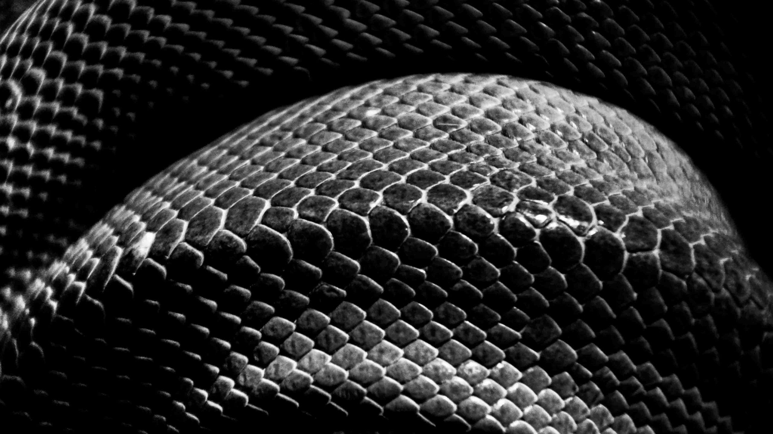 image-snake-3 crop